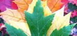 رنگ مد های پیشنهادی برای پاییز و زمستان ۲۰۱۵